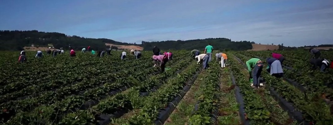 berry picking a family business
